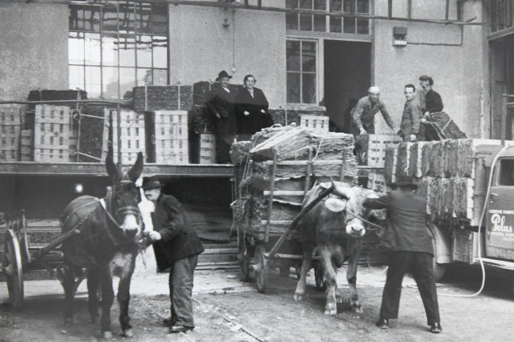 **Primo impianto di essicazione in Ticino** La Polus era all'avanguardia nella fermentazione dei tabacchi e nel 1933 istallò il primo impianto per l'essicazione artificiale del tabacco in Svizzera.